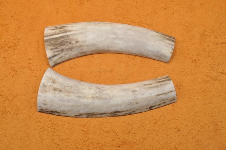 купить рога оленя цена украина